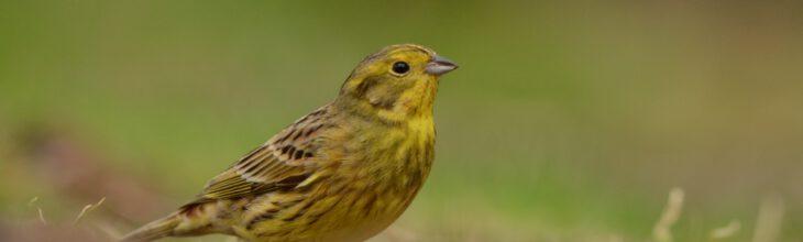 Akkers ingezaaid voor vogels