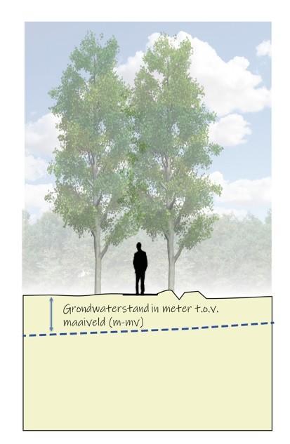 Illustratie grondwaterstanden